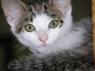 Bedtime Stories-Kitten, Attribution: http://www.flickr.com/photos/15958381@N02/1729358502/sizes/s/in/photostream/