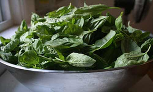 Healthy Recipes-Basil, Attribution: http://www.flickr.com/photos/galant/1698073179/