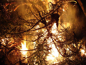 New Year's Eve Bonfire, Attribution: http://www.flickr.com/photos/fragiletender/3380200224/sizes/m/in/photostream/