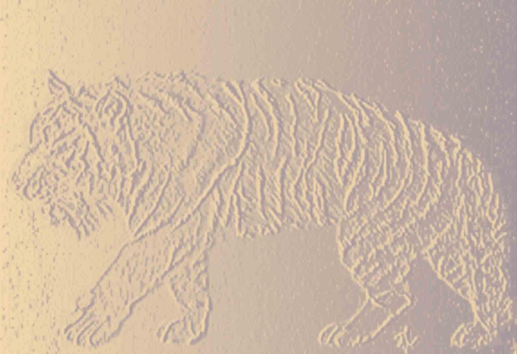 Soul Nourishment - Pencil Drawing Tiger