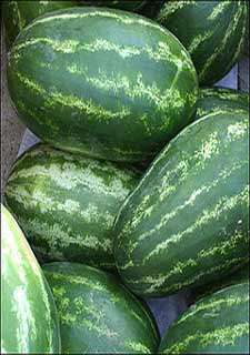 Watermelons Grow, Attribution-http://www.flickr.com/photos/37884983@N03/3745072700/sizes/s/in/photostream/